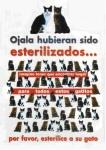 Esterilizacion gatos