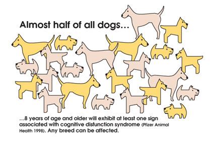Wobbler Syndrome In Dogs Santuario De Animales San Francisco De Asis