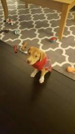 Ruby ahora Juno